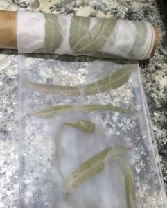 Eucalyptus Leaf Dye on Silk