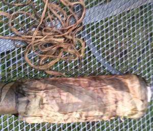 Eucalyptus Dye on Silk