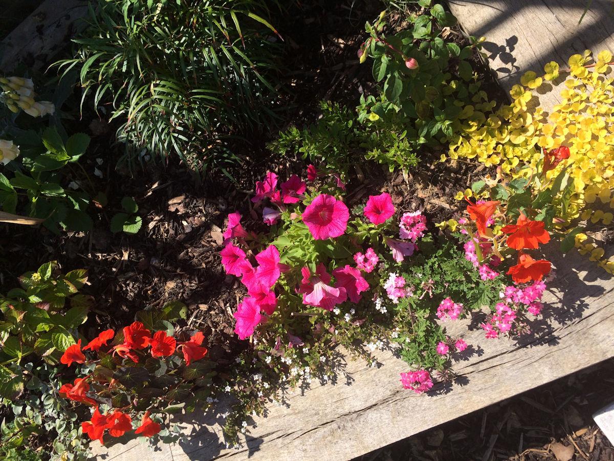 Petunias and Nasturtiums